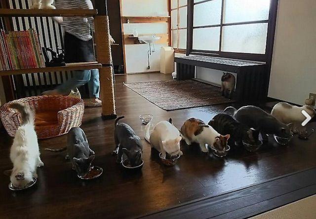 Cat Apartment Coffee(キャットアパートメントコーヒー)