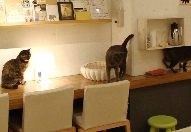 キューリグ 大名店 – 福岡 大名の猫カフェ