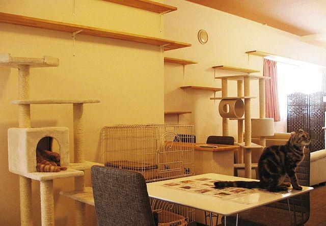 アミパ新潟店 – 新潟 西区/新潟大学前の猫カフェ