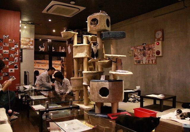 かごにゃん 新市街店 – 熊本 中央区/新市街の保護猫カフェ