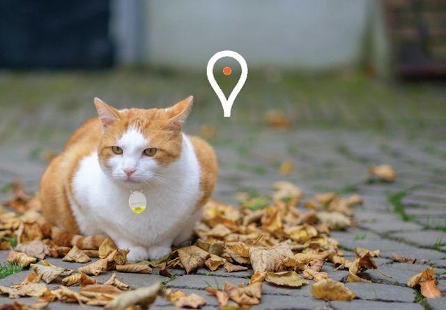 Wistiki-スマホで飼い猫の居場所を探せるオシャレな電子タグが登場!