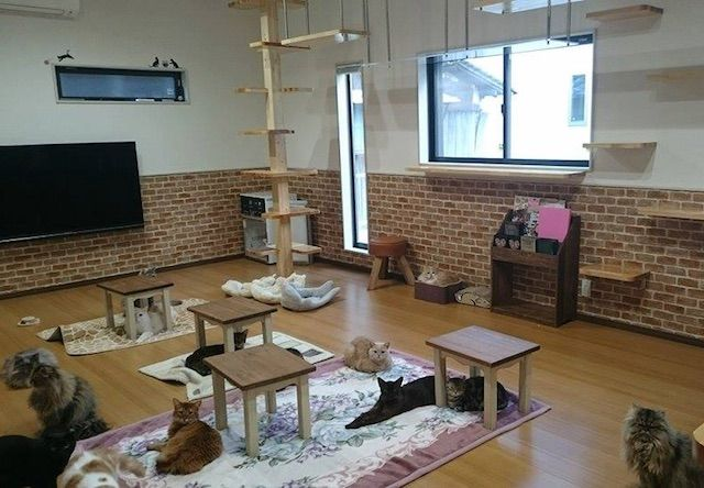 猫カフェ紅葉 – 大阪 泉南市/岡田の猫カフェ