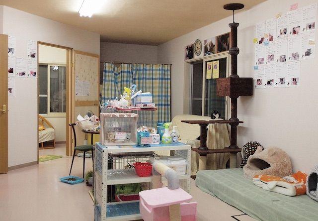 ニャイダーハウス – 札幌 西28丁目の猫カフェ
