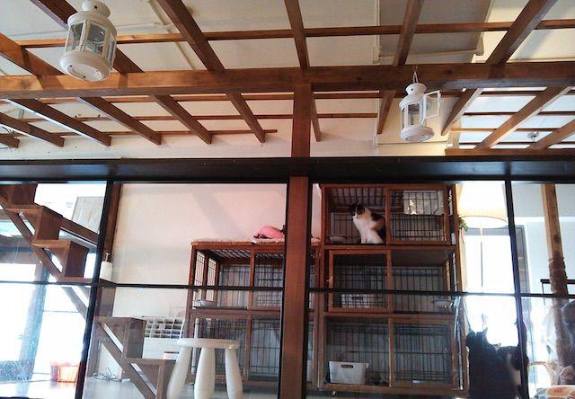 キューリグ 天神ロフト店 – 福岡 天神の猫カフェ