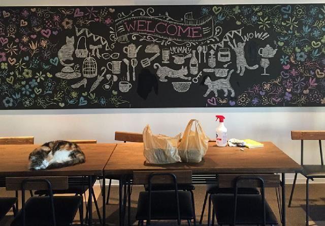 ねこカフェ&猫酒場 らて – 新潟 長岡駅前/大手通の猫カフェ
