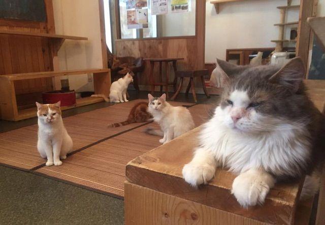 犬猫人 河原町本店 – 京都 河原町の猫カフェ
