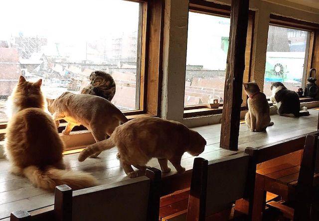 猫カフェ美猫 – 福岡 中央区/港の猫カフェ