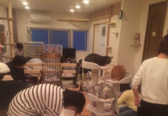 猫クラブ「く〜にゃん」 – 神戸 三宮の猫カフェ