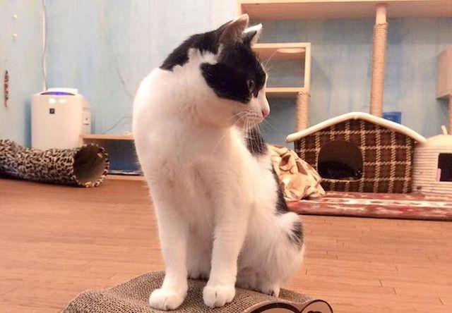 Dear Cat(ディアキャット) – 奈良 生駒市の保護猫カフェ