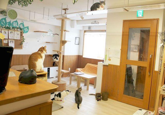cat's cafe ねこじゃらし – 熊本 東区/月出の猫カフェ