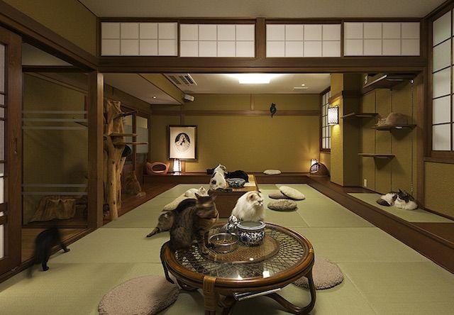 猫の時間 きた本店 – 大阪 中崎町の猫カフェ