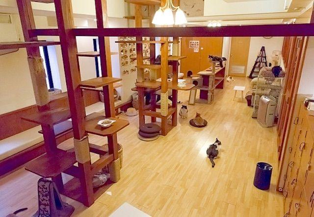 猫の箱 – 大阪/新大阪 西中島南方の猫カフェ