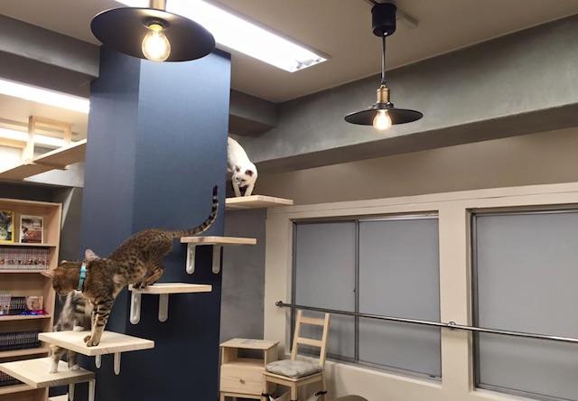 猫喫茶 空陸家