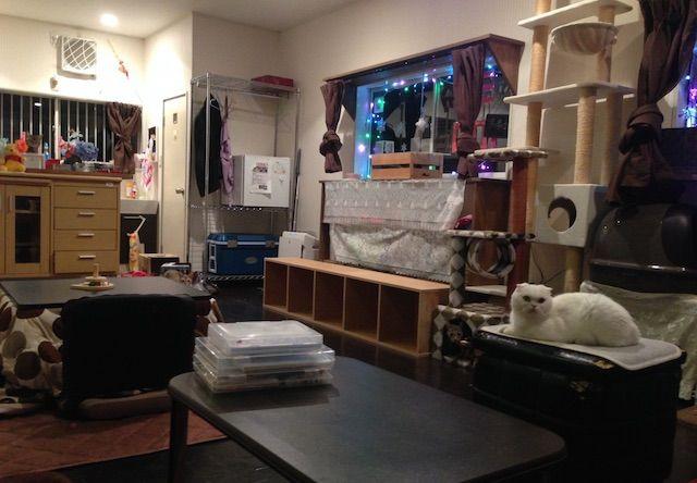 まいきゃっと – 横浜 都筑区/東方町の猫カフェ