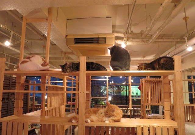犬猫人 御幸町2号店 – 京都 御幸町の猫カフェ