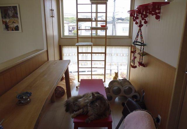 ペット イット メゾン – 千葉 中央区/鎌取の猫カフェ