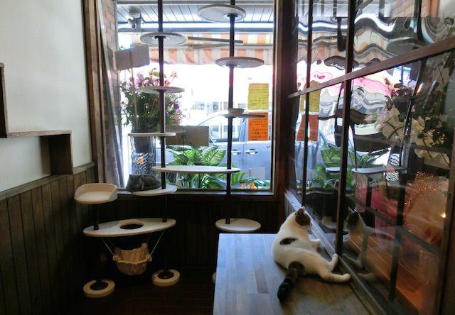 和風桶猫喫茶(わふうおけねこきっさ) with ラブファイブ