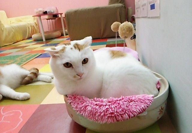 ねこ道楽 – 東京 練馬の猫カフェ