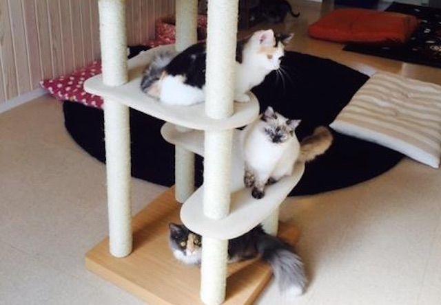 猫の時間 セカンドハウス – 大阪 黒崎町の猫カフェ