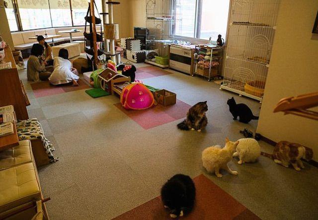福猫茶房 – 札幌 北区/麻生の猫カフェ