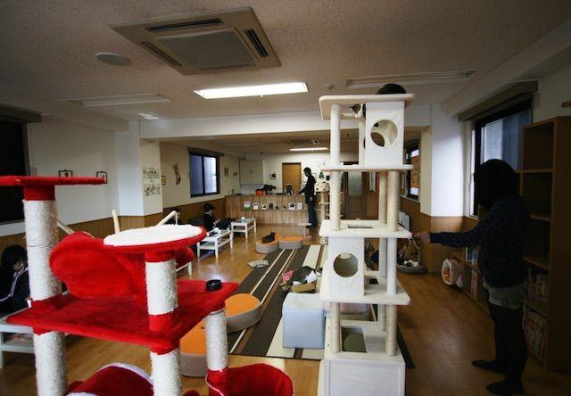 ねこ会議 – 京都 御池通の猫カフェ