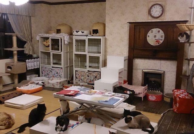 キャットラウンジ猫の館ME – 千葉 浦安市の猫カフェ