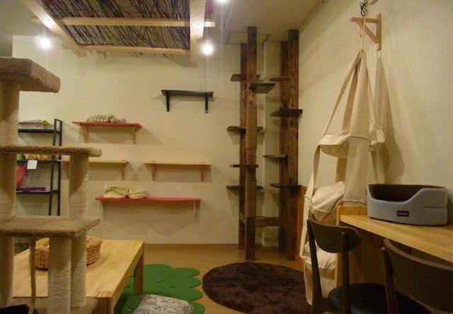 ネコカフェ ひなたぼっこ – 奈良 新大宮の猫カフェ