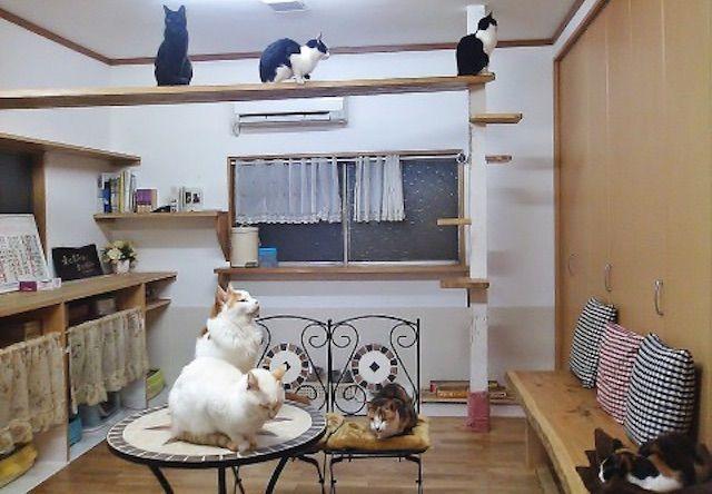 猫の家やすらぎ – さいたま市/南区 武蔵浦和の保護猫カフェ