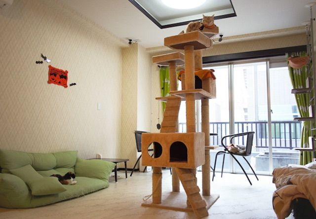 cat cafe nyanny 秋葉原店 – 東京 秋葉原の猫カフェ