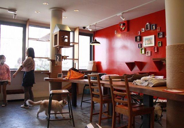 Cats Gallery(キャッツギャラリー) – 名古屋 上前津/鶴舞の猫カフェ