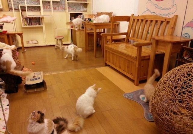 猫の手 – 千葉 柏の猫カフェ