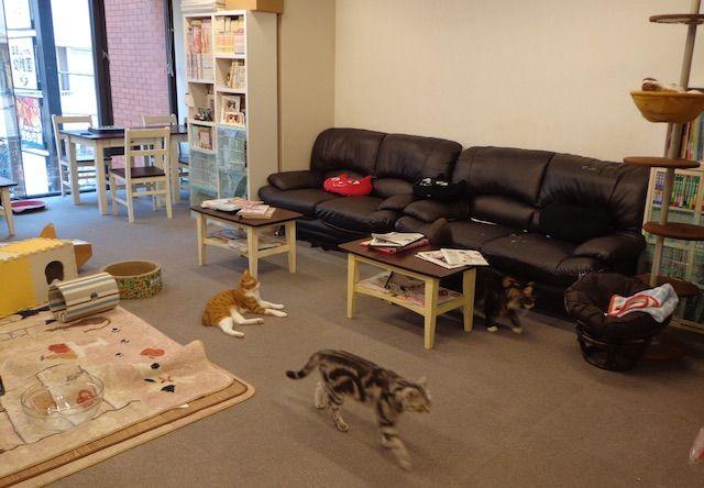 猫まるカフェ East