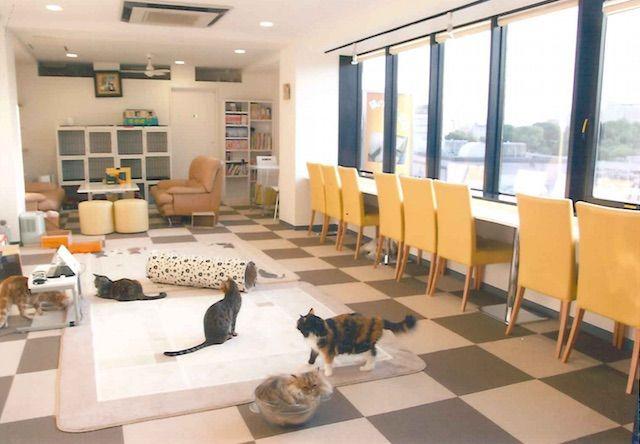 猫まるカフェ 上野店