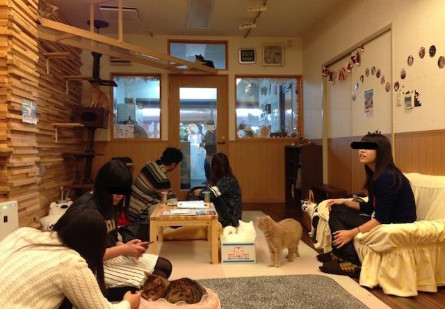 ゆる猫 – 大阪 堺東の猫カフェ