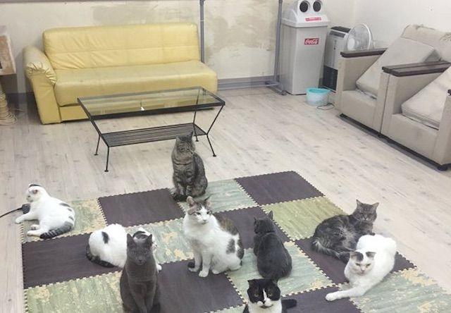 ねこコレ 新潟市役所前店 – 新潟 中央区/東中通の猫カフェ