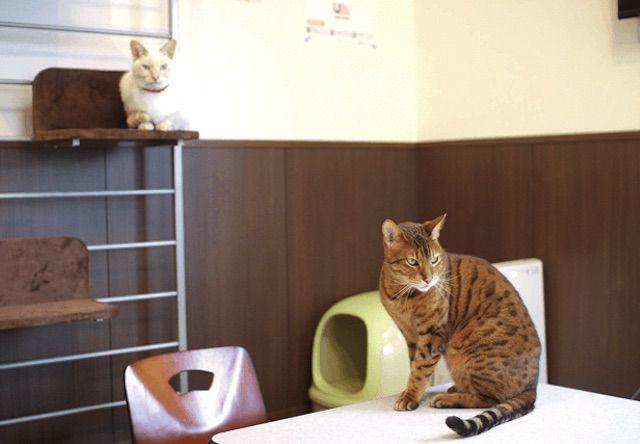 ねこカフェ まおン家 – 新潟 長岡市/青葉台の猫カフェ