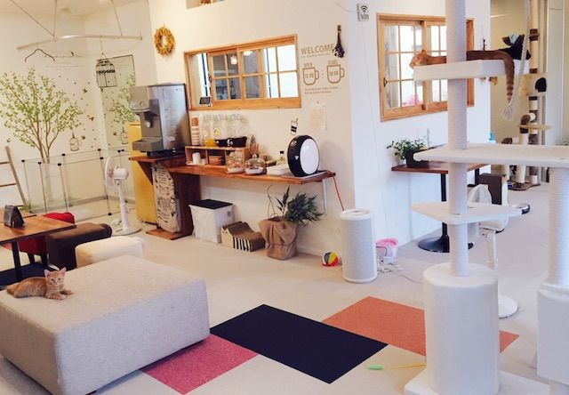 こねこカフェSanctuary(サンクチュアリ) – 岐阜 各務原/鵜沼の猫カフェ