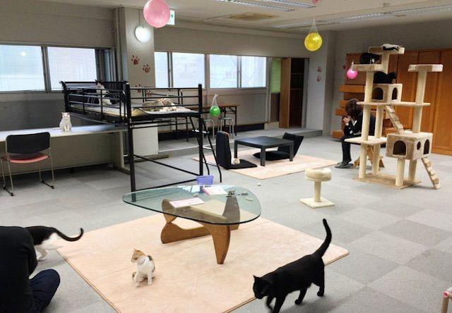 ねこまんま 静岡清水店 – 清水区/静岡駅前の猫カフェ