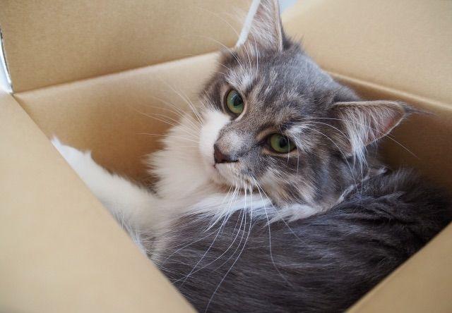 誤ってダンボールに梱包された猫が400km離れた場所で保護