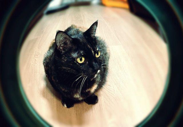 魚眼カメラアプリで撮影してみた - 猫の写真素材