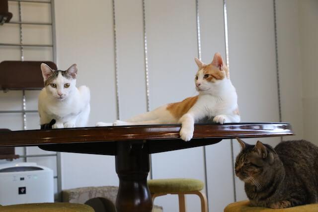 名古屋の猫カフェ「花の木シェルター」の店内イメージ