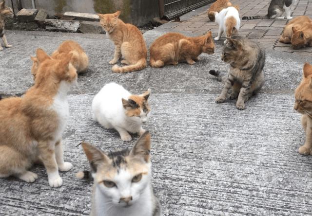 愛媛の猫島で餌不足、支援を求めると全国から大量の支援物資が!