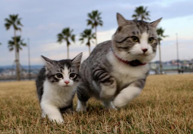 4/16〜猫の写真展×音楽コンサートが両国で開催されるにゃ