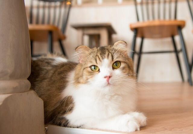 プロが教える猫の写真教室!原宿の猫カフェで4/28開催だにゃ