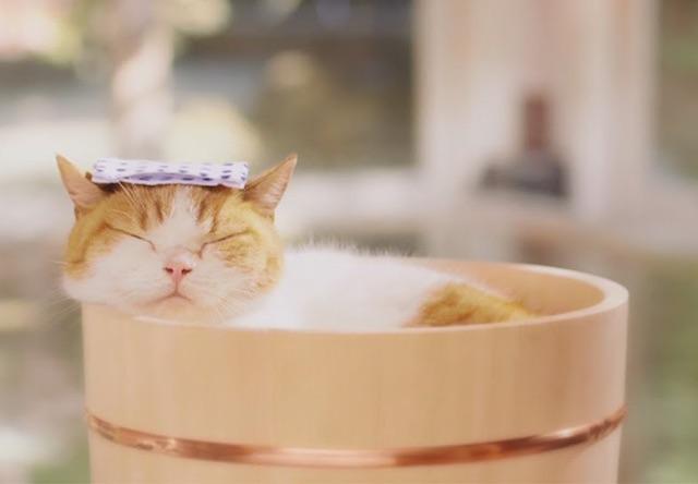 【猫動画】お風呂好きな猫の入浴シーン10選