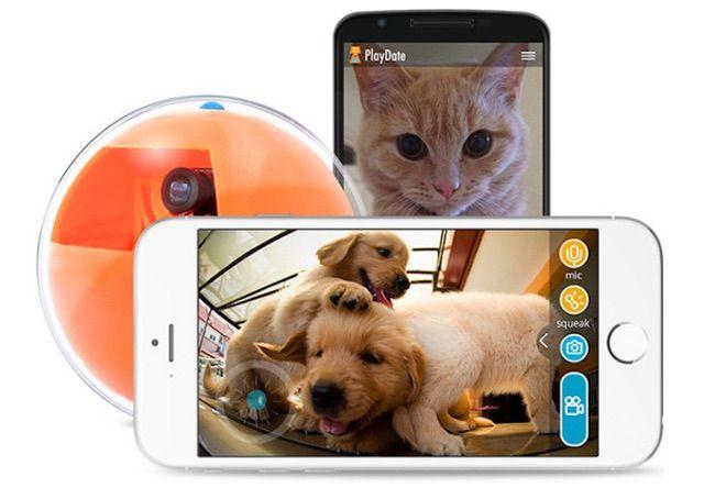 外出先からスマホで愛猫と遊べる&撮影できるボール型玩具