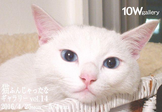猫ふんじゃったなギャラリー VOL.14