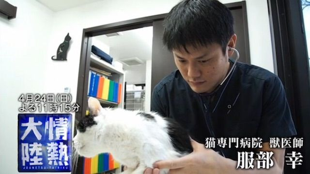 情熱大陸 東京猫医療センター