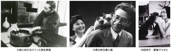 猫に恋した作家たち