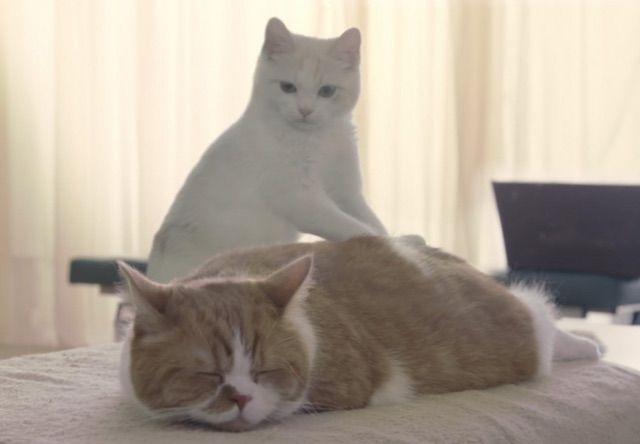 猫 CM マッサージ